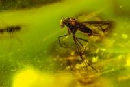 茯神昆虫琥珀-昆虫世界3