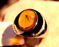 戒指中的昆虫